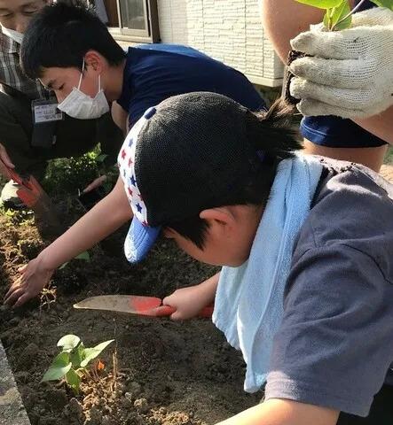 サツマイモ植え
